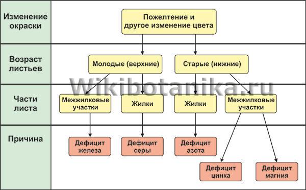 хлороз