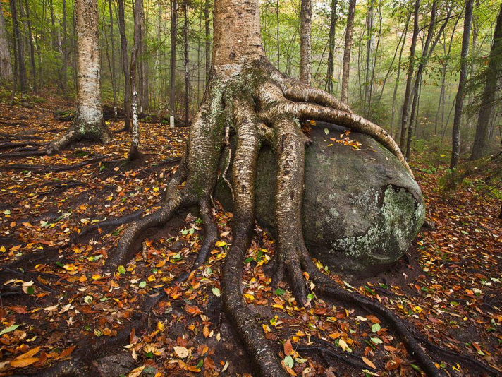 birch_boulder_adirondacks