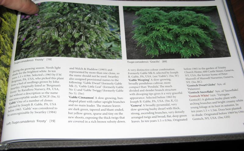 Encyclopedia of Conifers