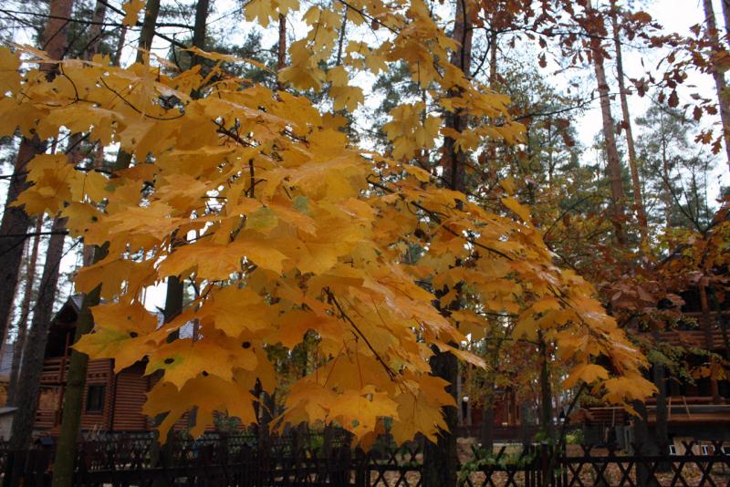 Осенние краски в саду