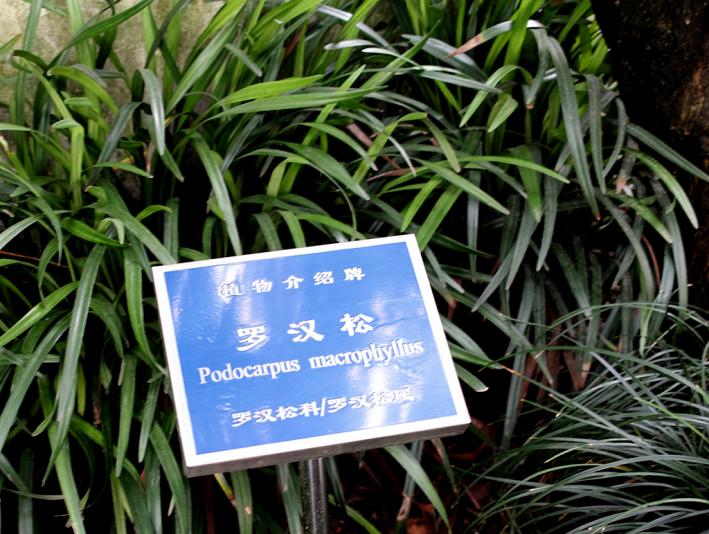 Ногоплодник, сад Юй Юань, Шанхай (Yuyuan garden)