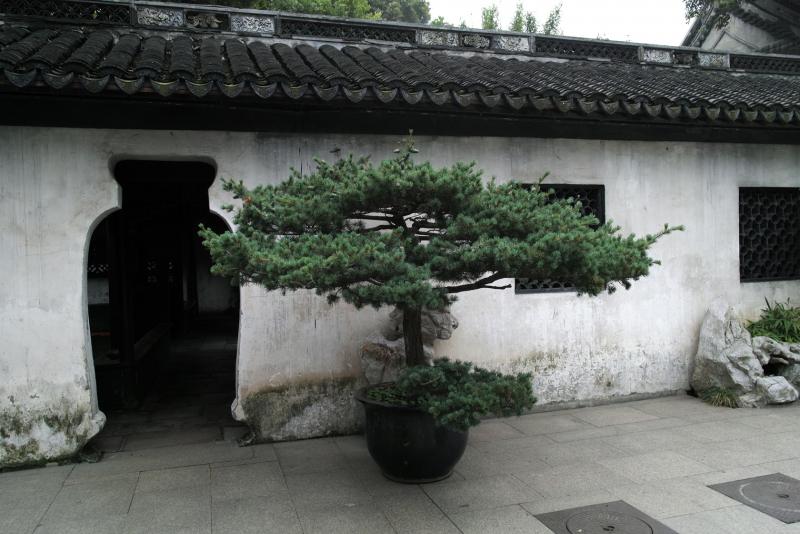 Бонсай, сад Юй Юань, Шанхай (Yuyuan garden)